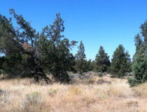 Redmond OR 5 Acres $135,500